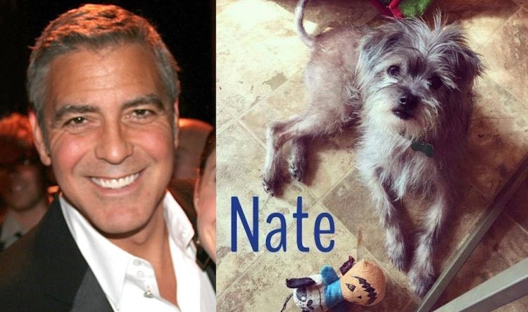 George Clooney adopts dog for dad CC Thescrutineer FB LuvFurMutts