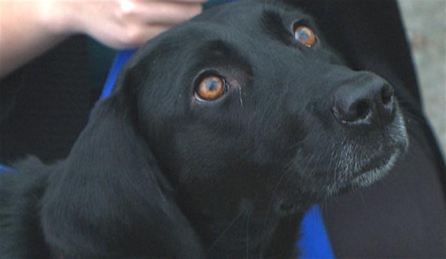 Roxanne dog finds lost woman screenshot WVEC