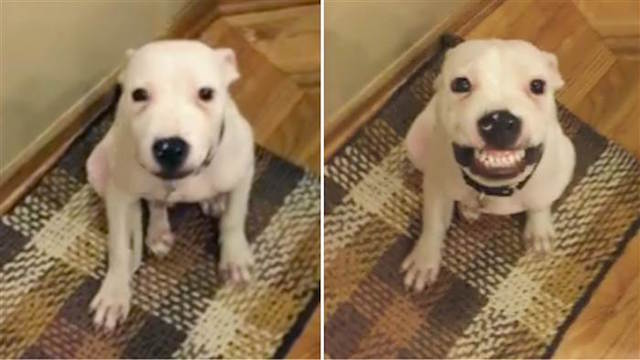 This dog can 'say cheese' and smile on demand –Amanda Robles