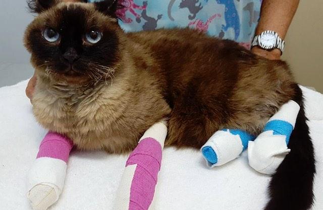 cat 2 Bandaged Baby Kangaroos FEATURED FB Waroona Veterinary Clinic