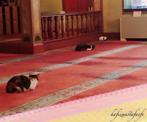 cats on carpet-in-mosque-Mustafa Efe-FB