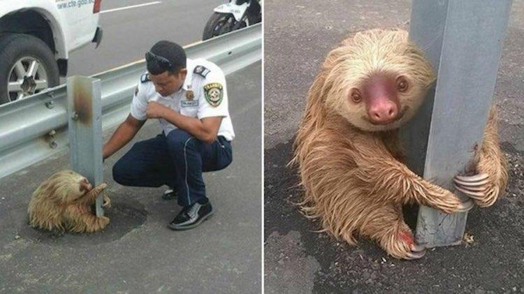cop-rescues-sloth-Facebook
