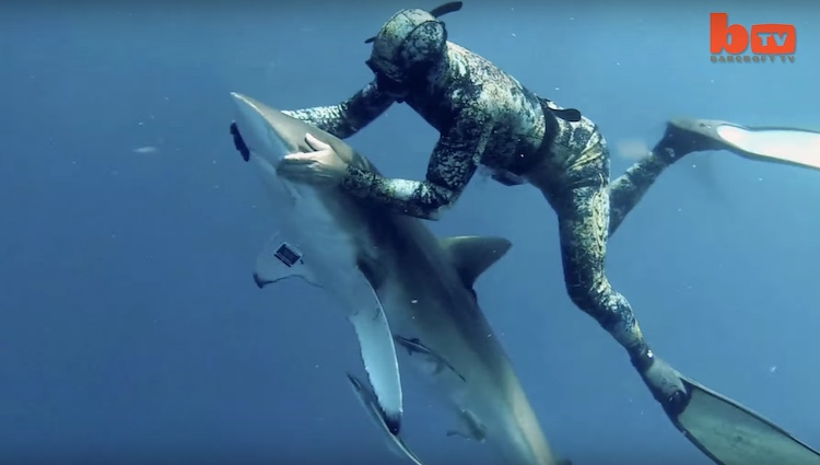 Diver removes hook screenshot Barcroft TV