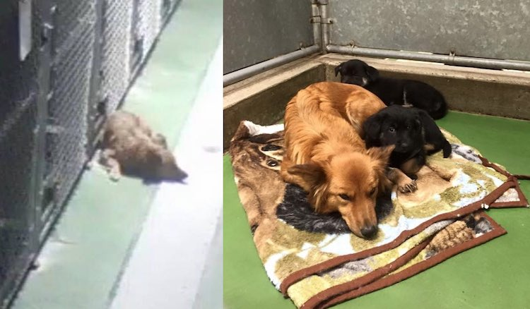 Dog Comforts Pups FB Barkers Pet Motel and Grooming