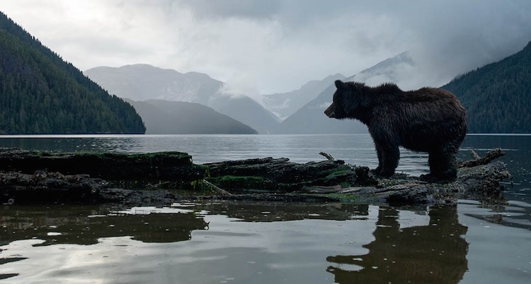 Great Bear Rainforest-Northern BC Tourism:Ian McAllister photo