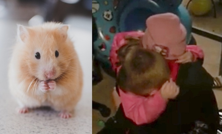 Hamster and Hugging Kids CC Unsplash FB Rachel Stout