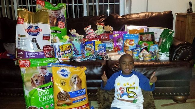 Lil man wanted to help dogs and cats. - Imgur MarcusShaw