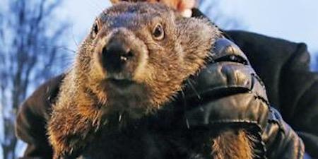 Punxsutawney Phil groundhog - Repubhub photo