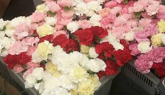 flowers hayden godfrey FB