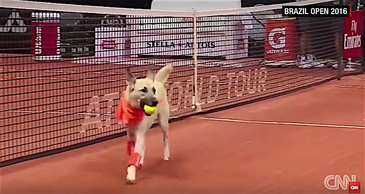 Brazil Open Ball Dogs Screenshot CNN