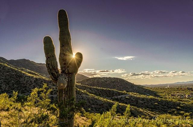 Cactus - CC Gfred