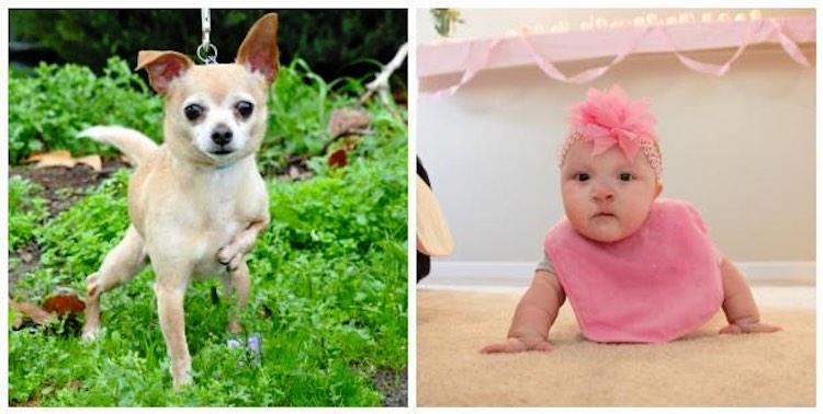 Dog & baby FB Umbrella of Hope