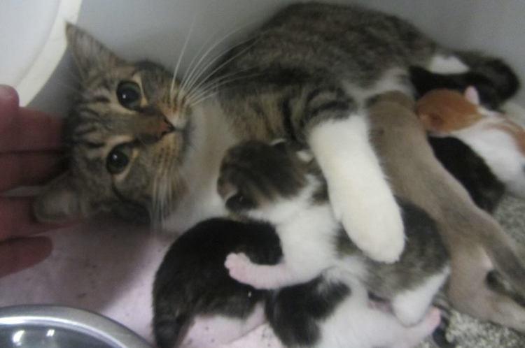 Nursing Cat Cropped - City Of Lagrange Animal Shelter Facebook