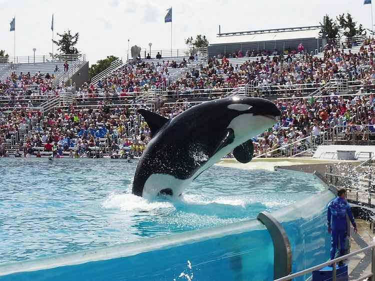 Orca SeaWorld cc scooby12353