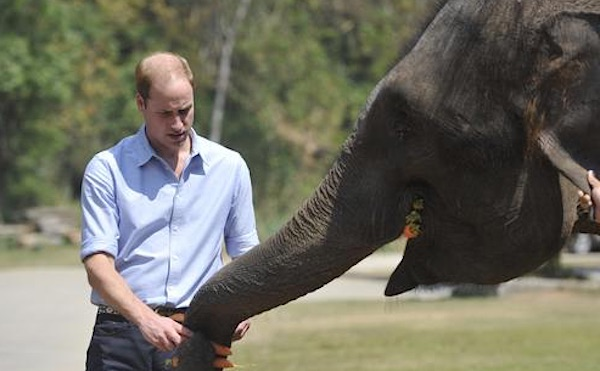 Prince William with elephant-youtube