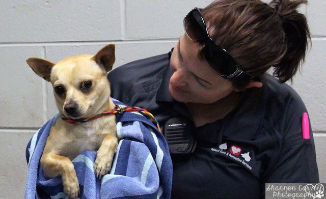 dog -Jacksonville Animal Care and Protective Services