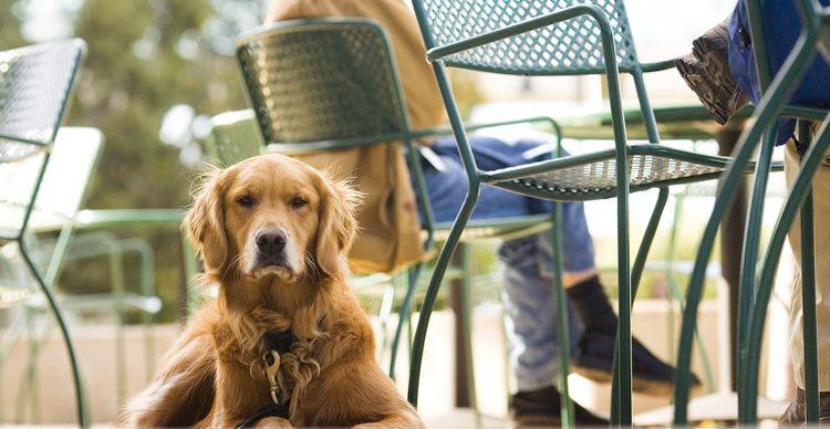 dog at cafe-cc-Thomas Hawk
