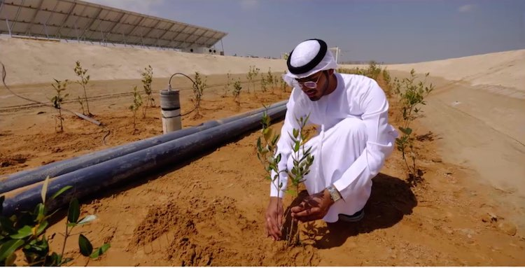 Arab biofuel plants planting-Masdar Institute of Science and Technology