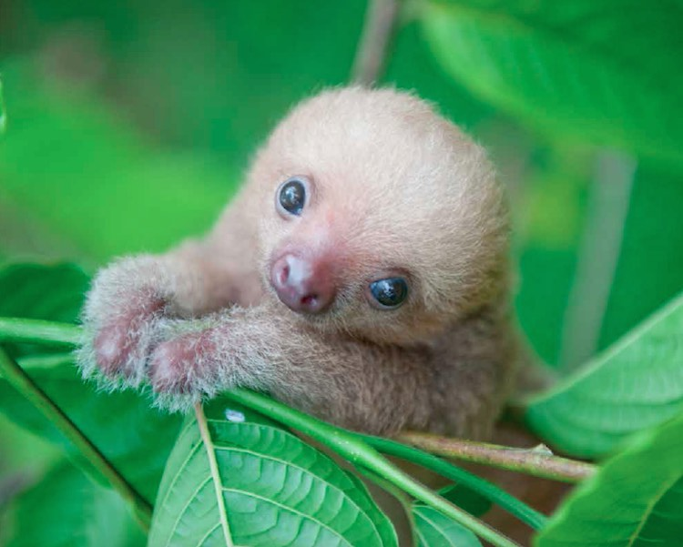 Baby Sloth - Release Sam Trull
