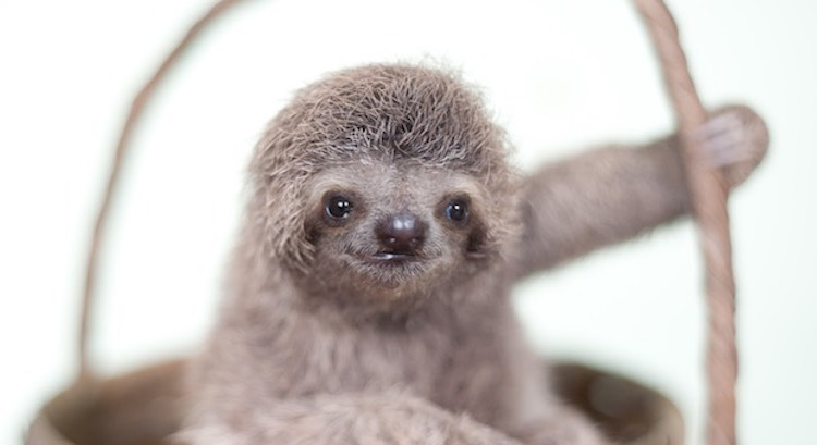 Image result for cute sloth