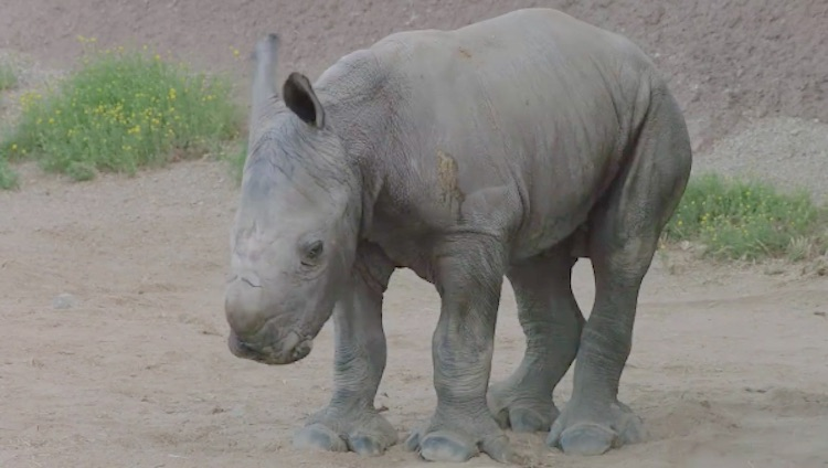 White Rhino - Facebook