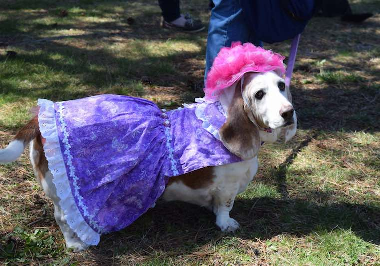dog-costume-FB-Tri-State Basset Hound Rescue