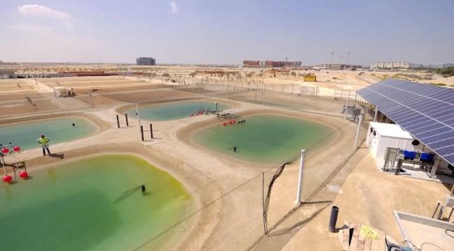 salt water bioplant facility-Sustainable Bioenergy Research Consortium