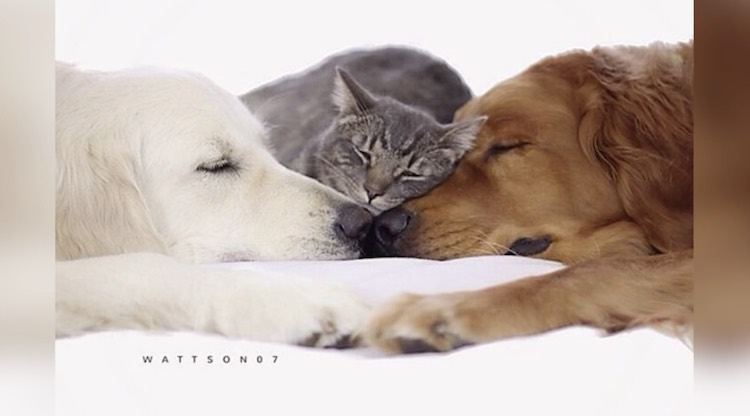 Cats and Dogs Cuddle Instagram PupFlix