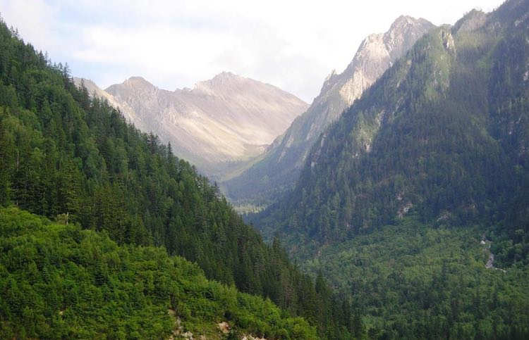 China's Forests Steadily Recovering From Decades of