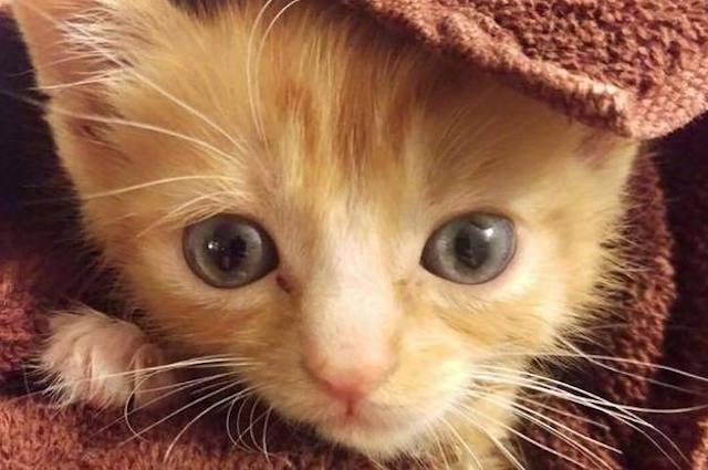 mac n cheez cat-Massapequa Pet Vet Facebook