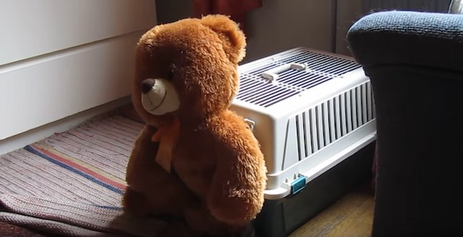 teddy bear next to pet carrier-youtube