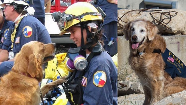 Bretange 9-11 rescue dog dies Released CY-Fair VFD