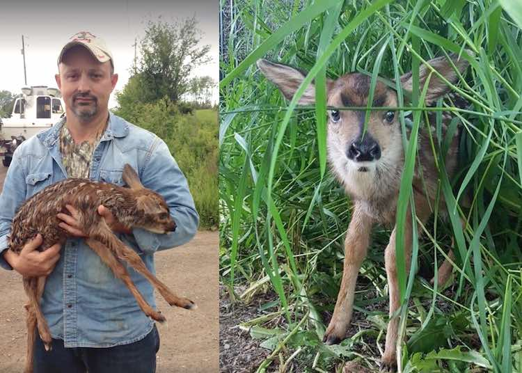 Deer delivered by c section 2 FB Michele Steele FB NLWS