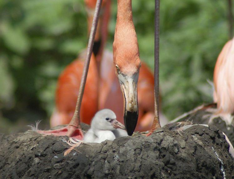 Photo by Grahm S Jones, Columbus Zoo and Aquarium