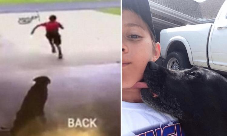 Mystery Boy Hugs Dog FB Hollie Breaux Mallet