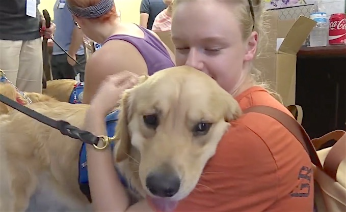 Orlando Comfort Dogs screenshot WFAA