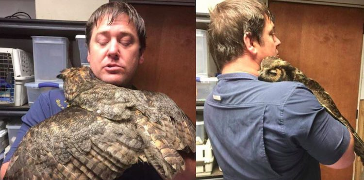 Owl Hugs Man released Wild At Heart Rescue