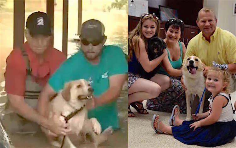 Rescue Dog Adopted by Sheriff FB Sheriff Troy Nehls