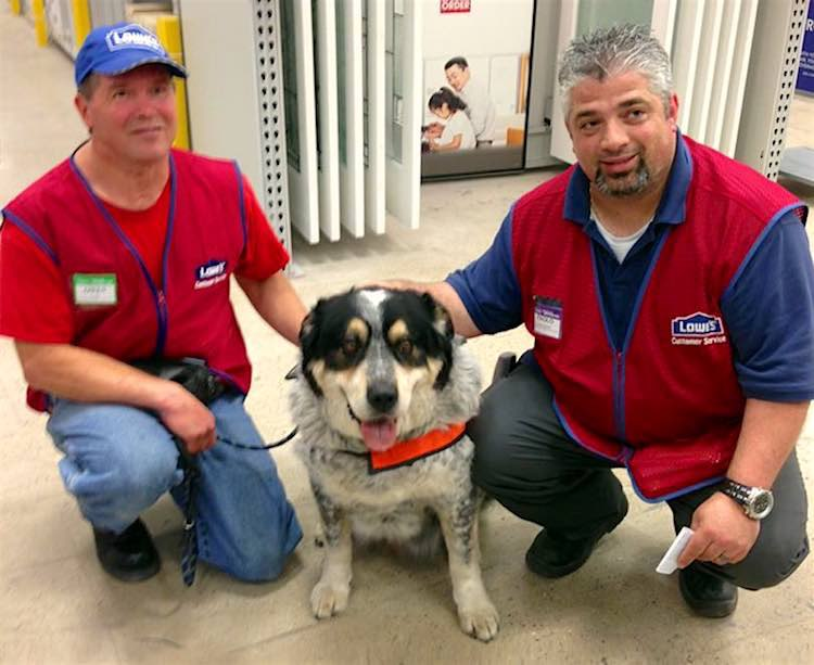 Service Dog Hired at Lowes FB Lowes Canada