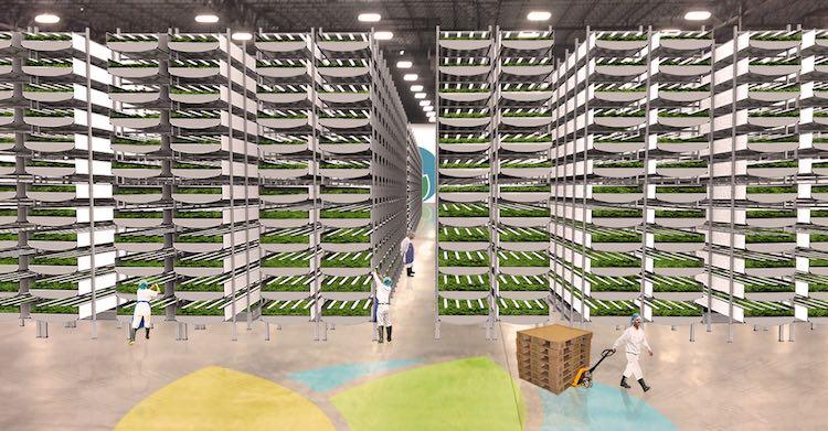 Vertical Farm 2 released Aero Farms