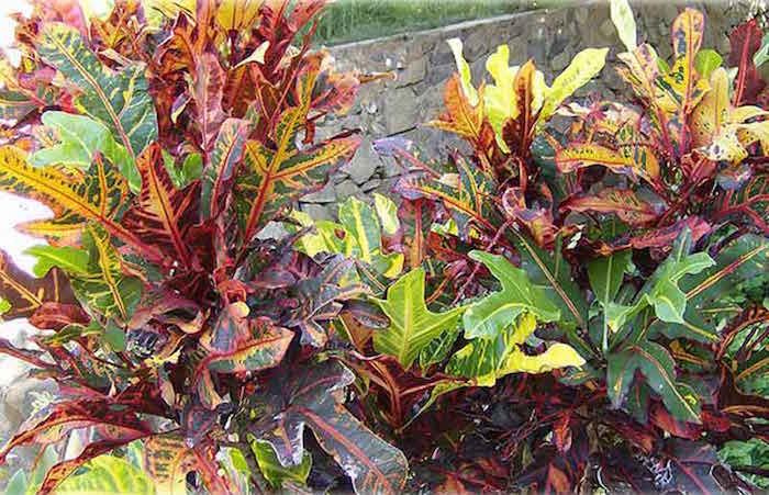 plant-san-francisco-zika-CC-WikipediaThePhotographer