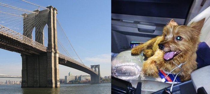 toto-dog-brooklyn bridge-mashup-submitted