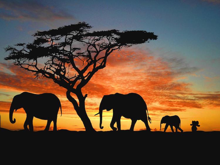 Africa Elephant Toy CC Imgur