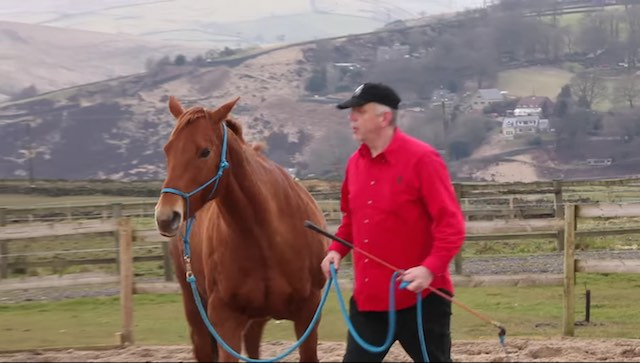 Horse with handler-youtube-HABIT-project