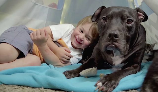Micahel-Vick-pittbull-with-boy-Barkpost
