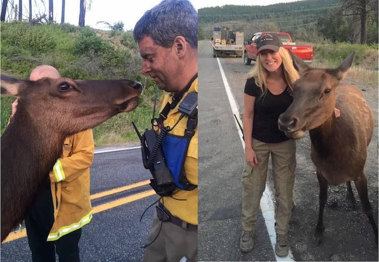 Orphan Elk A FB Kittitas County Fire Dist 7