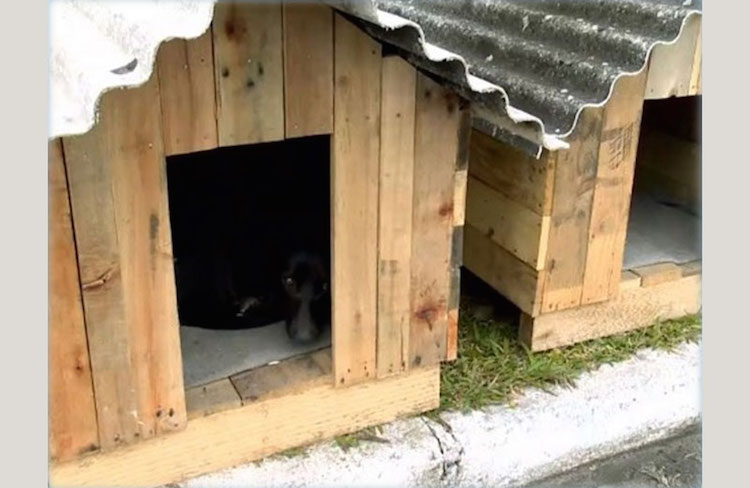 Dog Houses–RBS TV