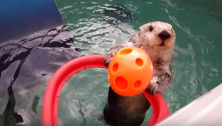 Eddie the Otter-Youtube