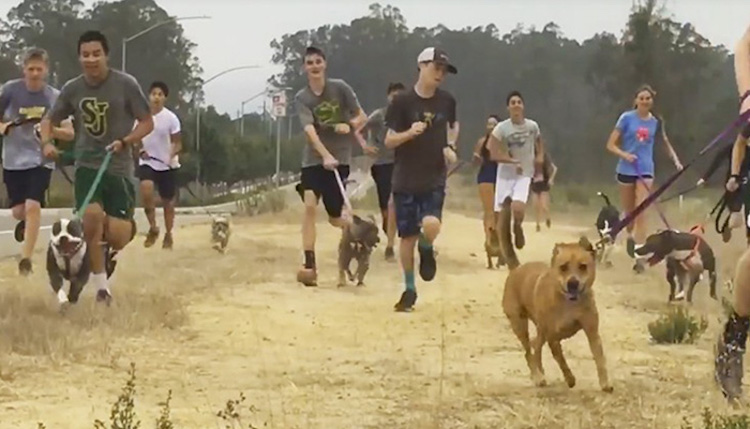 High School Cross Country Team and Dogs-Facebook
