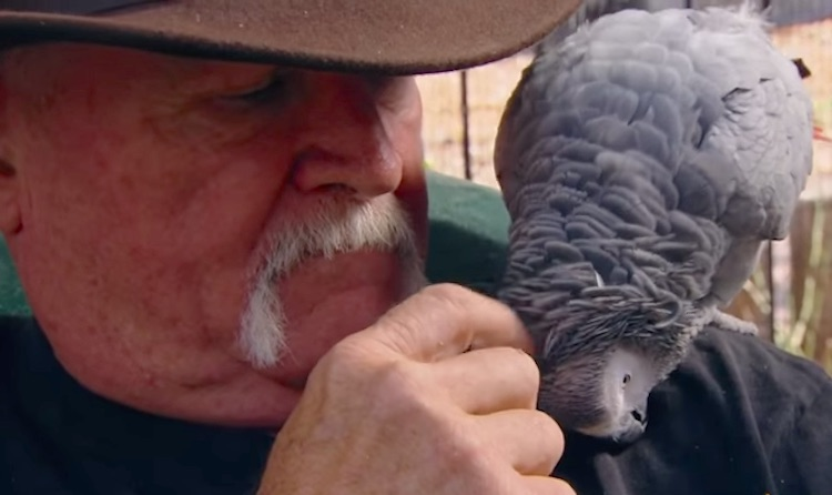Parrot and Veteran-Youtube